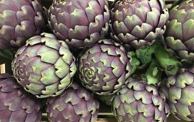 Artichaut violet Salambo bio