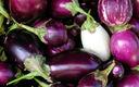 Aubergine ovale violette bio Provence Les Paniers Davoine