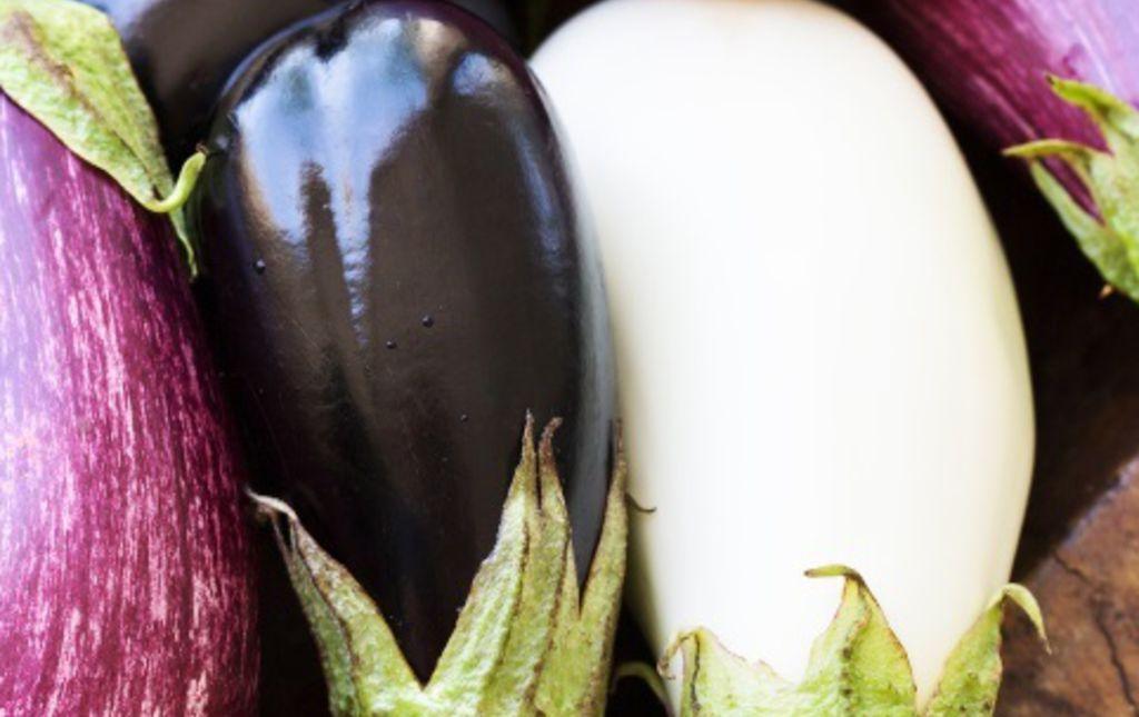 Aubergines blanches et violettes panachées bio