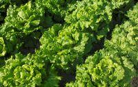 Salade bio provence paniers davoine