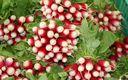 radis rose long provence les paniers davoine bio