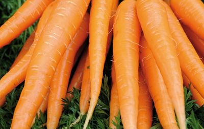 Botte de carottes bio