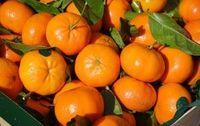 Mandarine feuille France