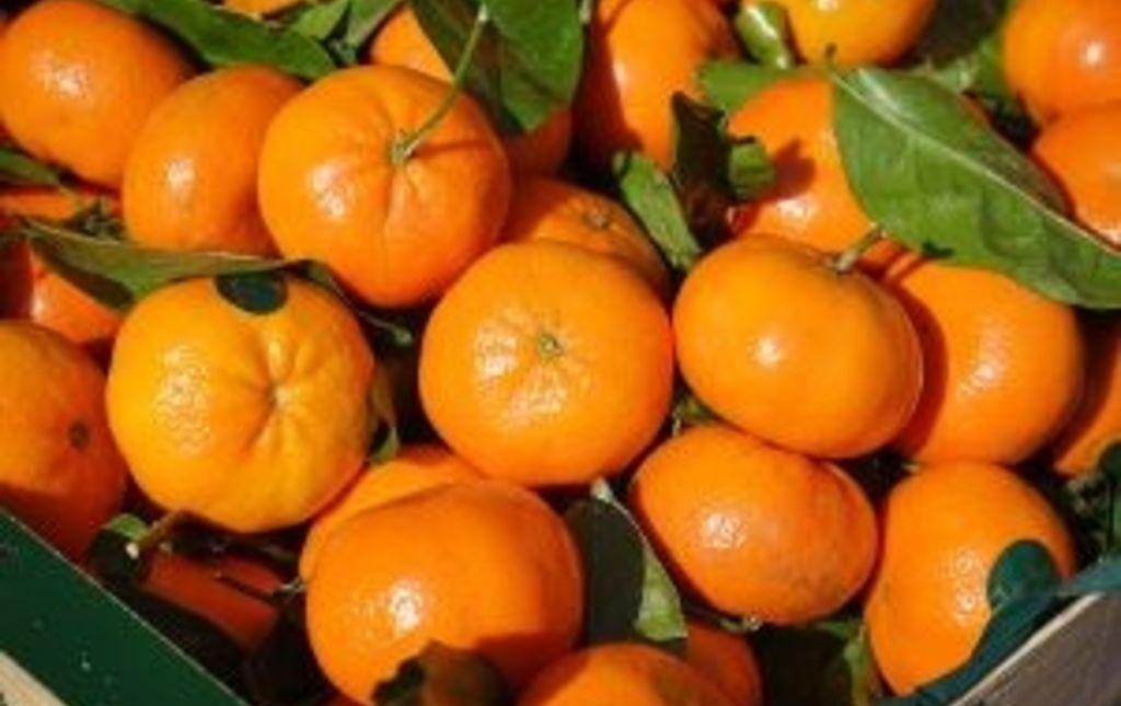 Mandarine feuille France bio