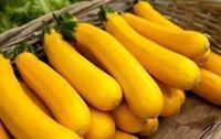 Courgette jaune bio Provence Les Paniers Davoine