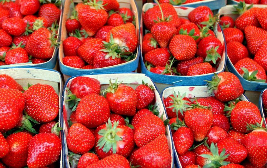 Barquette de fraise gariguettes bio Les Paniers Davoine