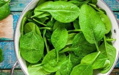 Salade Pousse d'épinard bio
