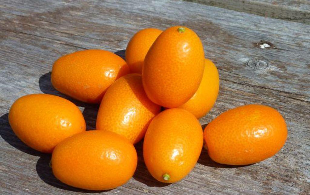 Kumquat corse bio