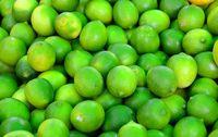 Lime bio - citron vert de Corse !