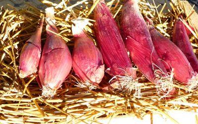 Oignon rouge de Simiane bio