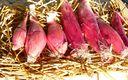 Oignon rouge de Simiane bio Provence Les Paniers Davoine
