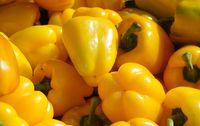 Poivron jaune bio