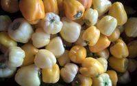 Poivron petit, blanc, jaune et bio