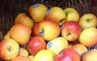 Pommes Braeburn Bio Provence Les Paniers Davoine