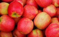 Pomme Crips Red bio Provence Les Paniers Davoine
