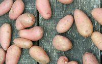 pomme de terre desiree bio rouge les paniers davoine provence