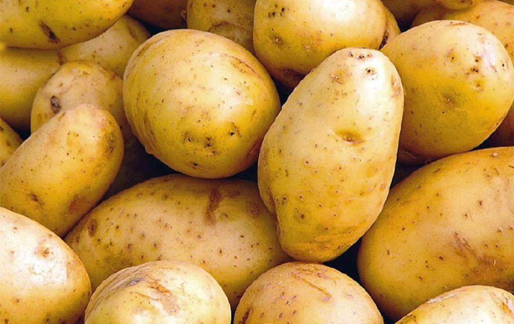 Pomme de terre de conservation bio