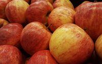 Pommes Gala bio Les Paniers Davoine