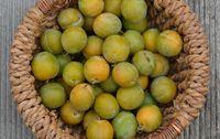 Prune reine claude dorée de Provence bio
