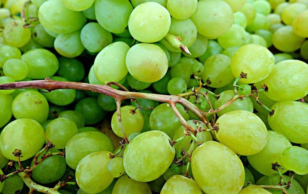Raisin blanc bio Danlas Les Paniers Davoine 1