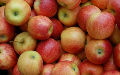 Pomme Reine des reinettes bio