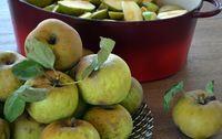 pomme reinette grise du canada bio