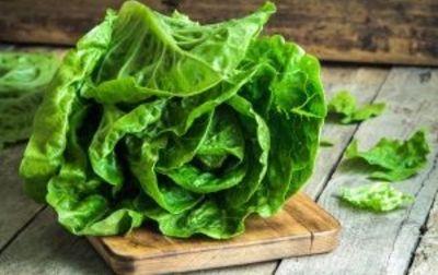 Salade Romaine Bio