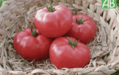 Tomate ronde charnue rose GENEROSE bio