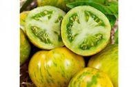 Tomate green zebra bio provence les paniers davoine