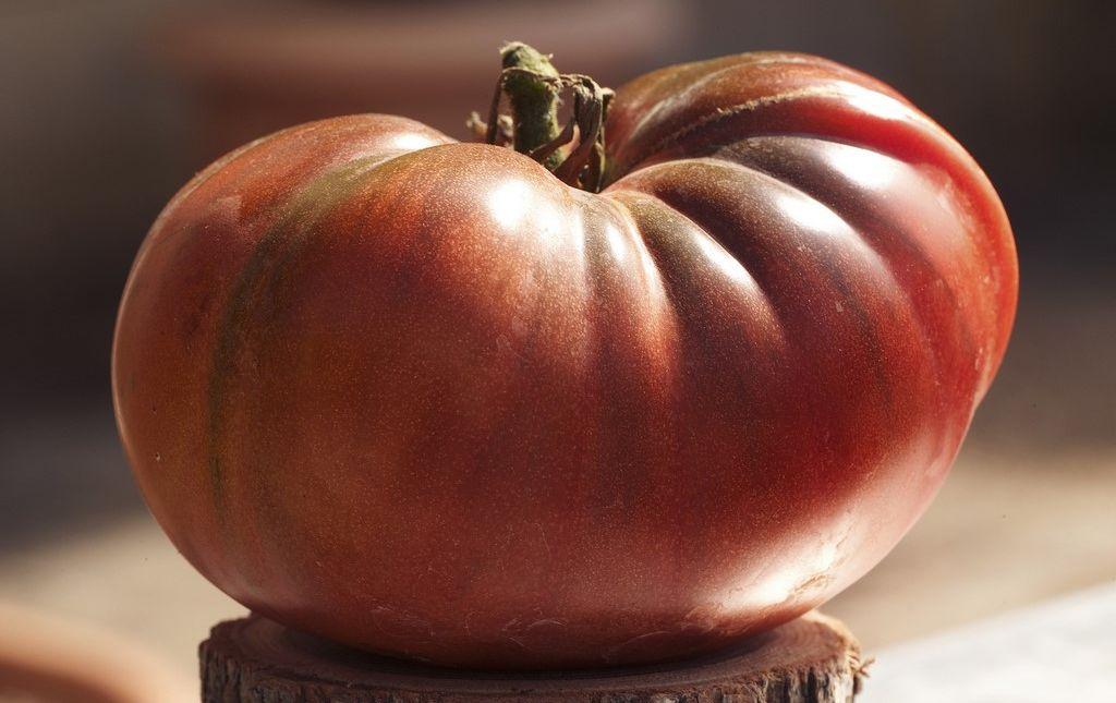 Tomate ancienne Noire de Crimée bio