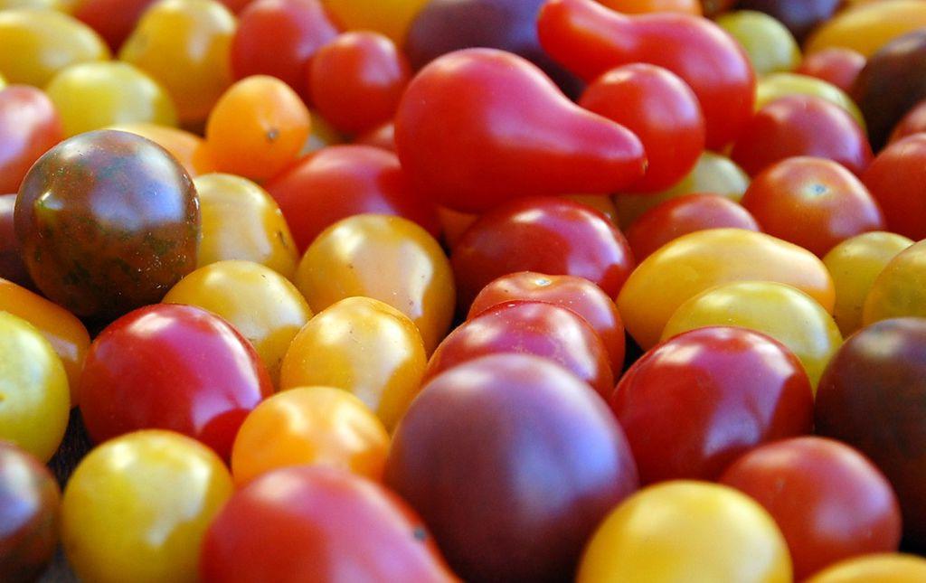 Tomates cerise bio multicolores