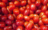 Tomates cerises bio Provence Les Paniers Davoine