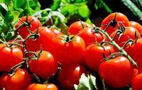 Tomates grappe bio provence les paniers davoine