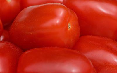 Tomates Roma bio